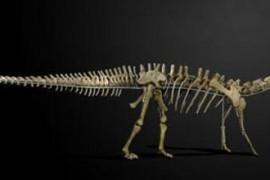 Dinossauro vendido