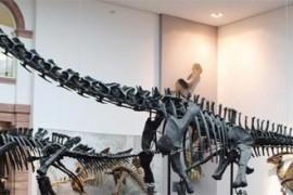 esqueleto dinossauro londres