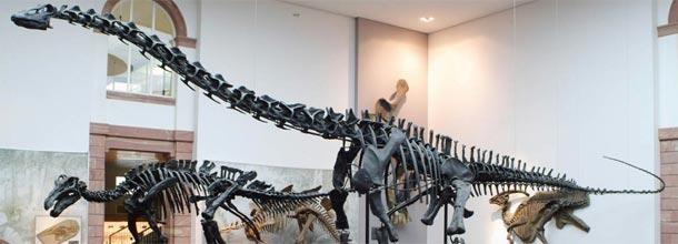 Um esqueleto de dinossauro para o maior lance: quem dá mais?